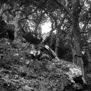 """Exposición """"Quejíos en el bosque"""""""